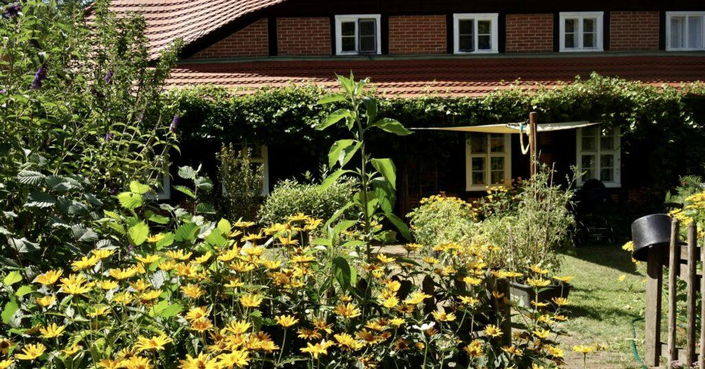 Wohnhaus im Museumsdorf Glashütte, davor ein Meer gelber Blumen