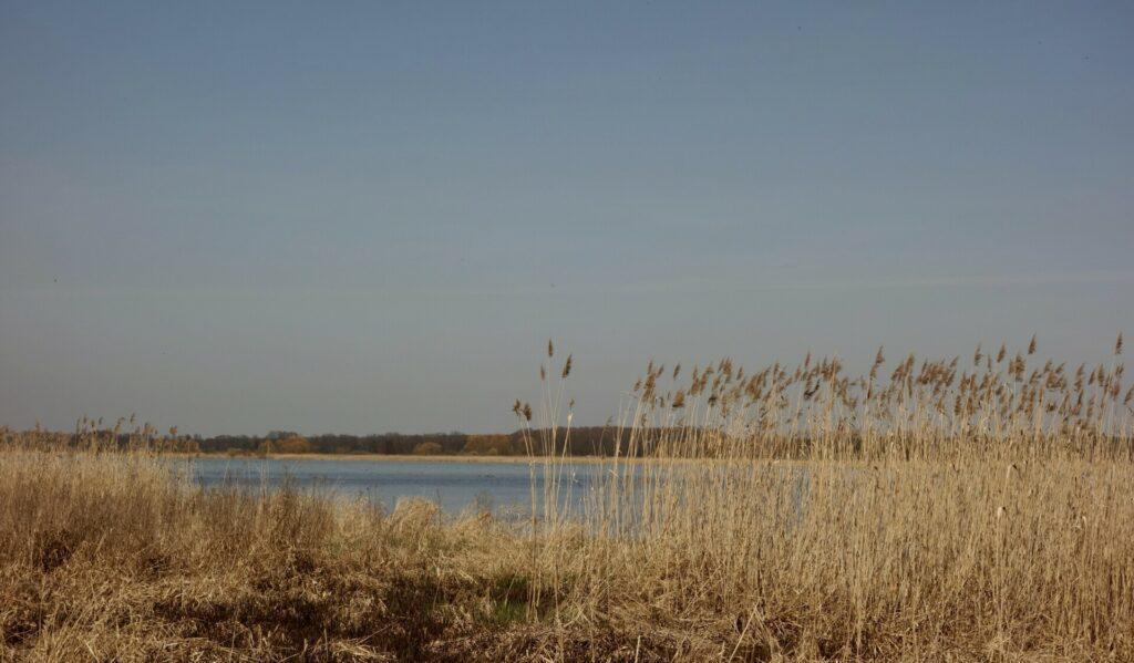 Vogelschutzgebiet am Streng