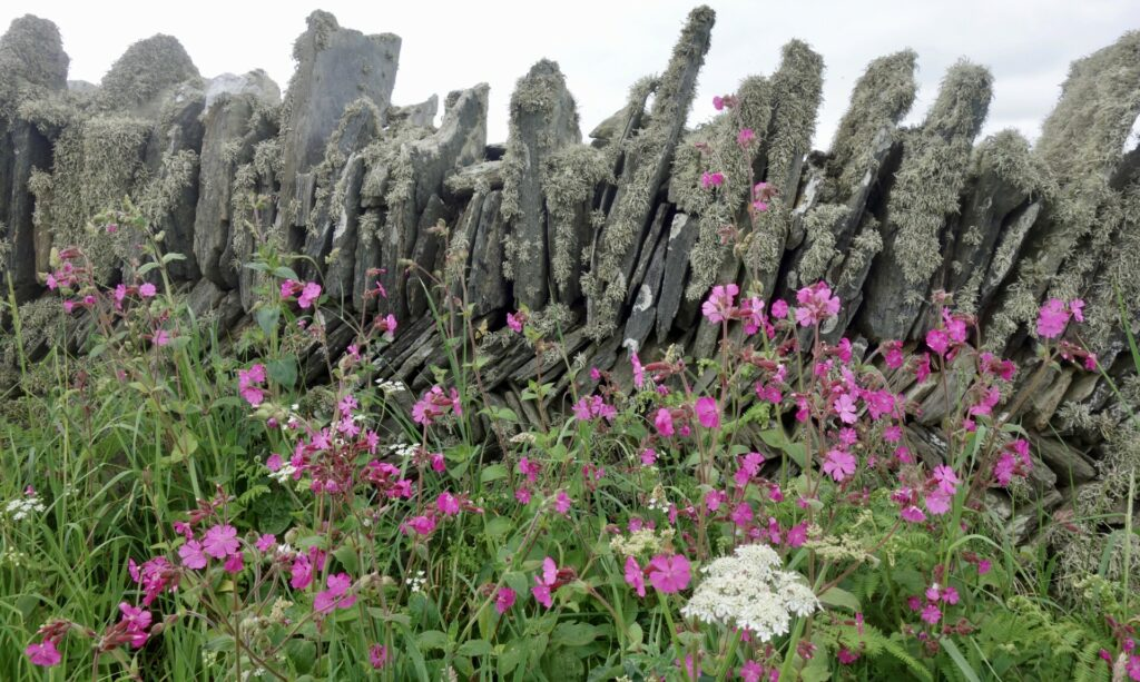 Tintagel - Boscastle. Eine Wanderung zu König Arthur an der englischen Nordküste Cornwalls.